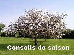Conseil de saison
